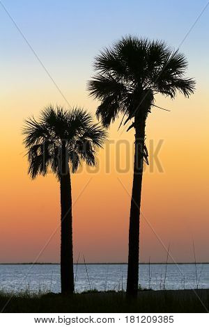 A pair of palm trees are silhouetted by a colorful sundown sky over the Gulf of Mexico at Tarpon Springs Florida.