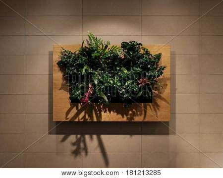 Green wall, eco friendly vertical garden, wall plants decoration