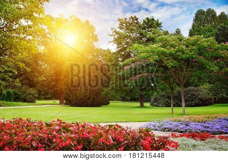 summer park with beautiful flowerbeds and sun
