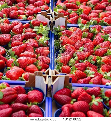 many boxes of ripe red strawberries for sale in a fruit and vegetable shop