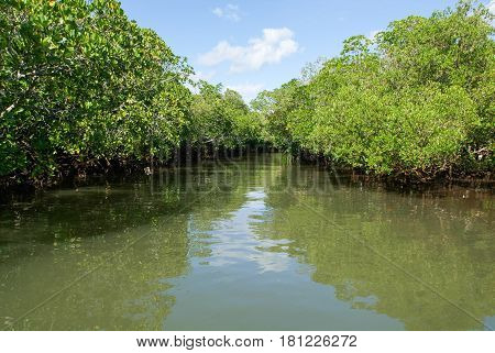 The Backwaters At The Coast Of Mayotte Island