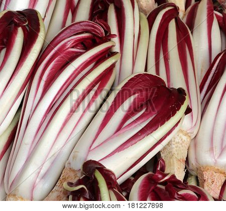Red Radicchio Havested In The Po Valley In Italy In Winter