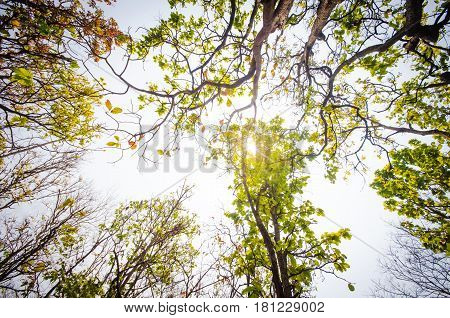 Low angle of sunlight through the trees come down in the daytime.