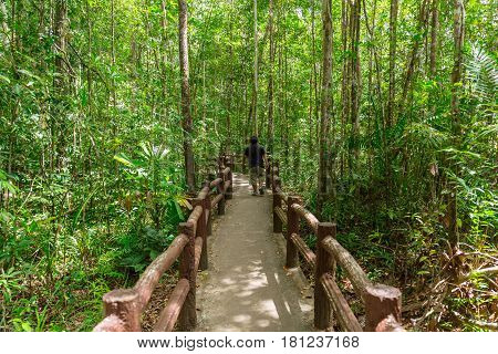 Into The Forest, Walkway To Emerald Pool Or Emerald Lake, Nature Swamp In Beautiful Green Blue Lagoo