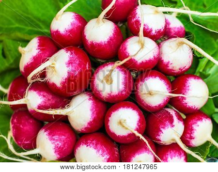 Bunch of fresh radish on white plate closeup, wooden background. Freshly harvested organic vegetables. Red natural european radishes.