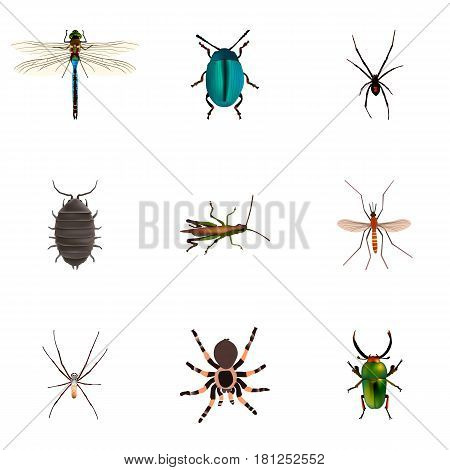 Realistic Bug, Tarantula, Damselfly And Other Vector Elements. Set Of Hexapod Realistic Symbols Also Includes Spider, Damselfly, Locust Objects.