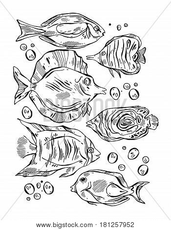 Hand drawn vector lined illustration set of tropical exotic fishes.Tropical fish isolated on white background.Tropical fish underwater.Aquarium fish lined illustration on white background.Sea fish set