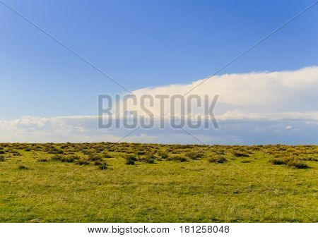 Plain grassland with some shrubs in the back blue sky with white clouds.