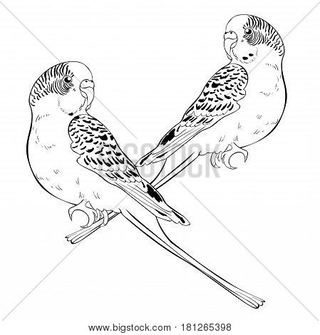 Coloring With Cute Wavy Parrot Couple Vector Illustration