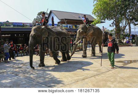 Dak Lak , Vietnam , March 12,2017 : Man riding Elephant in elephant racing festival in Jun village i in Dak Lak, Vietnam