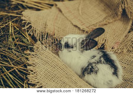 Cute Rabbit Lying On Sackcloth