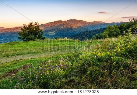 beautiful countryside landscape. wild flowers on rural field near the tree on a tranquil summer morning. mountain ridge under cloudy blue sky