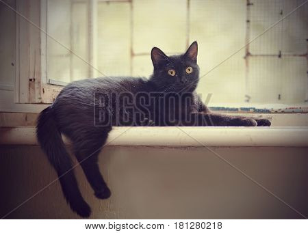 Black cat with yellow eyes lies at a window with a grid.