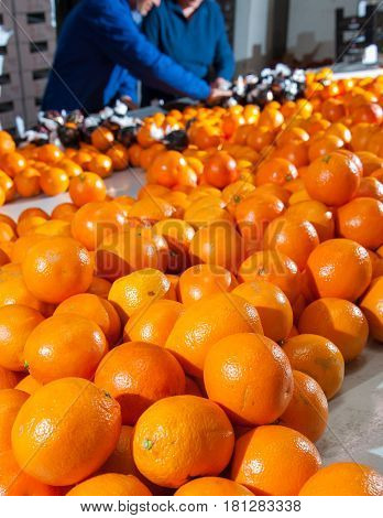 The Working Of Oranges