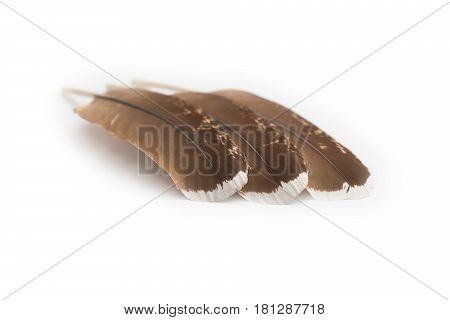 Three brown capercaillie feathers diagonally on a white background