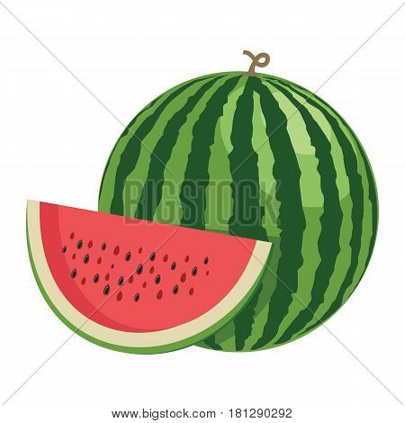 Watermelon. One whole watermelon fruit and a half. Vector illustration.