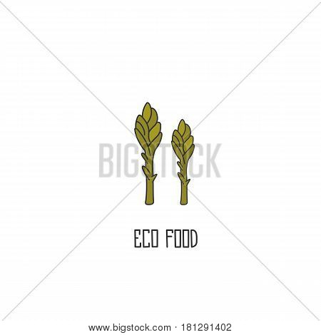 Asparagus hand drawn on white background. Vector illustration.