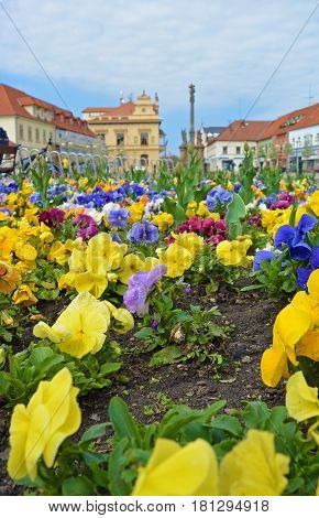 Closeup view on flowerbed on central square of Czech spa city Podebrady which is dominated Marian and Holy Trinity columns and city Seat of local government.