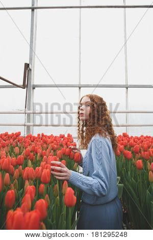 Girl looking up while touching red tulips in orangery