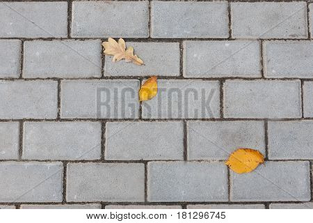 Stone paving texture. Abstract structured background of modern street pavement slabs pattern with fall leaf