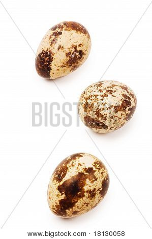 Three egg quail isolated on white background poster