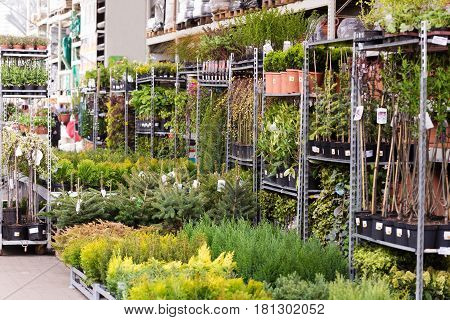 variety of trees and plants in nursery store