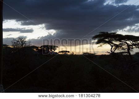 SIlhouetto of acacia trees on Serengeti National Park landscape in Tanzania Africa at sunset.