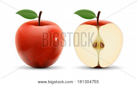 Integer and cut apple isolated on white background. Stock vector illustration.