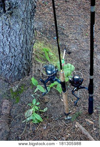 fishing rods neatly standing near a tree