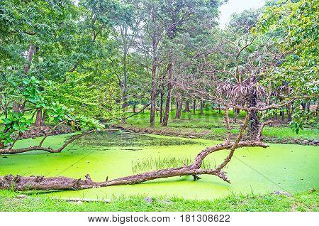 The Pond In Deepa Garden