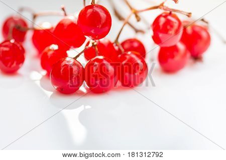 Bunch of vibrant red guelder-rose berries on white background sunlight flecks clean minimalist styled image copyspace