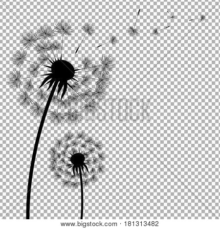 Dandelion With Transparent Background