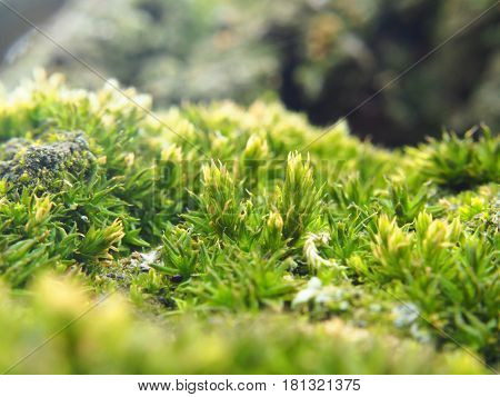 Extreme close up of moss on tree