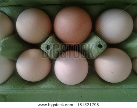 Egg - protected from external influences different shells or shell oval foodstuff