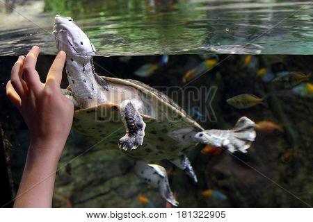 Child's hand through the glass stroking the turtle.