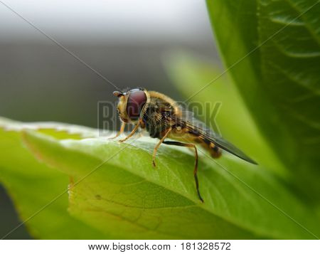 Extreme close up of wasp sitting on leaf
