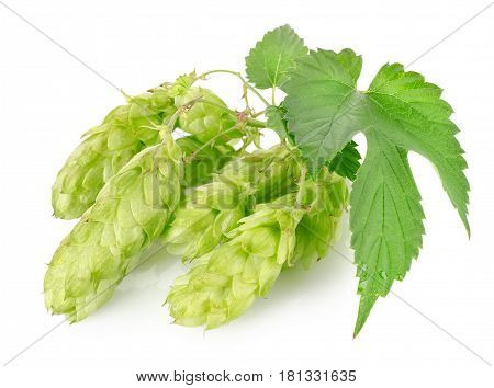 Cluster of hops with leafs isolated on white background