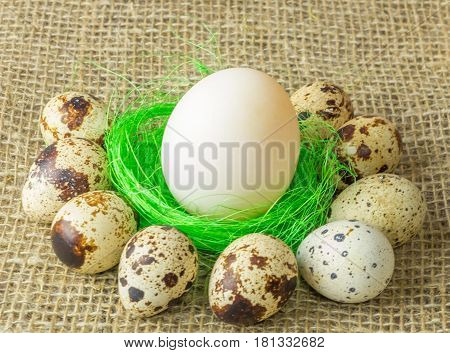 one white egg lying on the filler sisal green light green color surrounded by quail eggs on a wooden table covered with burlap