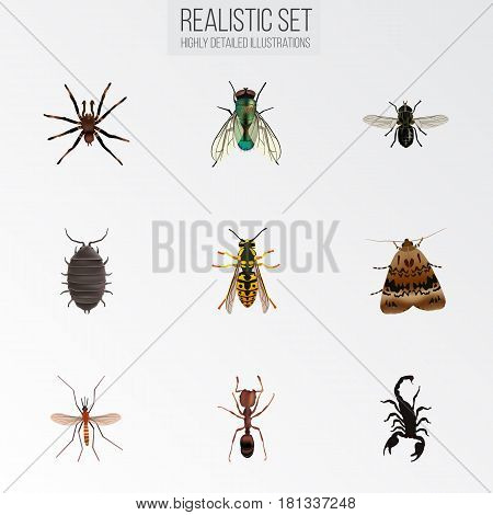 Realistic Bee, Poisonous, Gnat And Other Vector Elements. Set Of Hexapod Realistic Symbols Also Includes Alive, Gnat, Fly Objects.