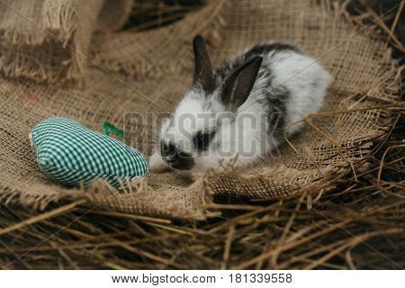 Cute rabbit small easter bunny domestic pet with long ears and fluffy fur coat lying with green heart on sackcloth on natural hay background