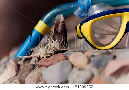 Beautiful thorn and cone conchs marine shells or seashells sea snails on grey and red stones rocky surface on sunny day on blurred blue and yellow diving mask background. Idyllic summer vacation