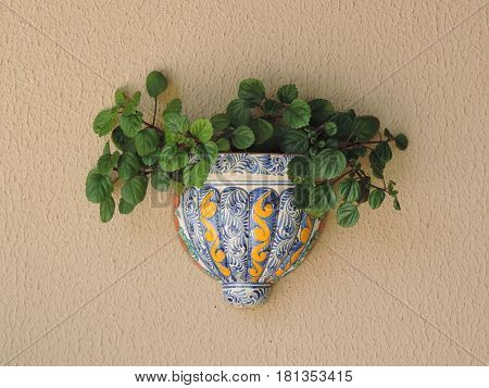 A porcelain vase fixed to the wall with a plant
