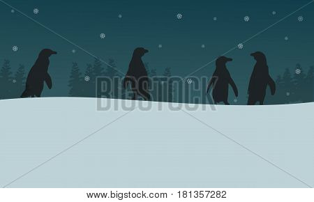 Penguin at night scenery silhouettes vector illustration
