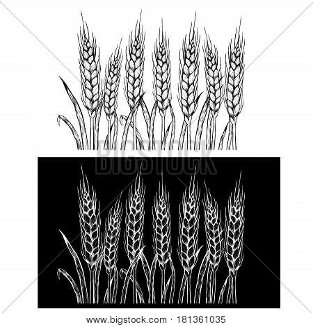 Hand drawn set of rye. Repeat horizontal pattern. Drawing spikelets. Sketches isolated. Black and white graphic design. Vector illustration.
