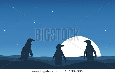 At night scenery with penguin silhouette vector illustration
