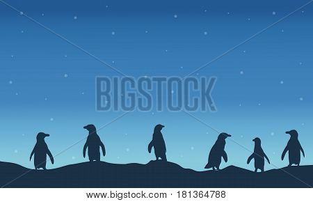 Penguin silhouette at night scenery vector illustration