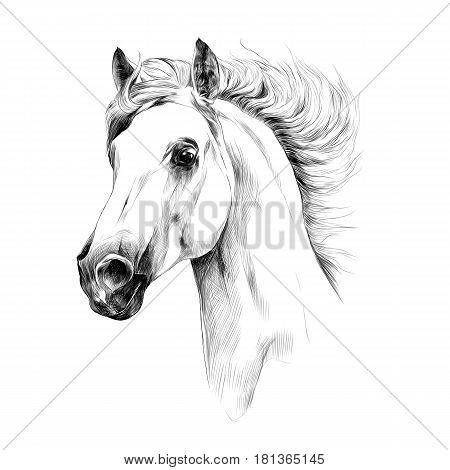 horse head profile sketch vector graphics black