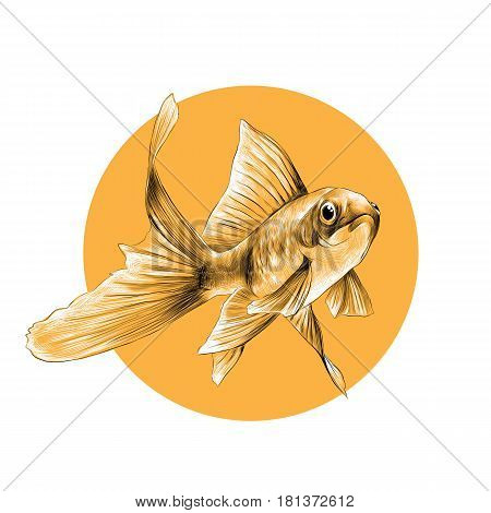 goldfish sketch vector graphics black and white pattern on the background of a yellow circle