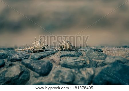 Beautiful Marine Shells Crawling On Grey Stones