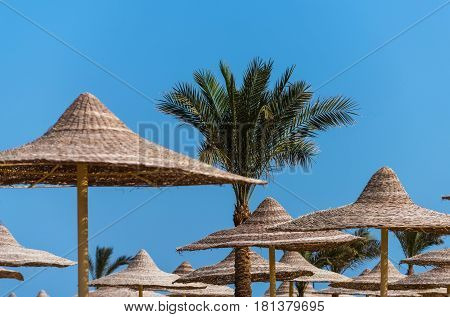 Wicker umbrellas parasols or sunshades and tropical green palm trees with evergreen leaves on bright sunny day on idyllic blue sky background. Summer vacation in paradise